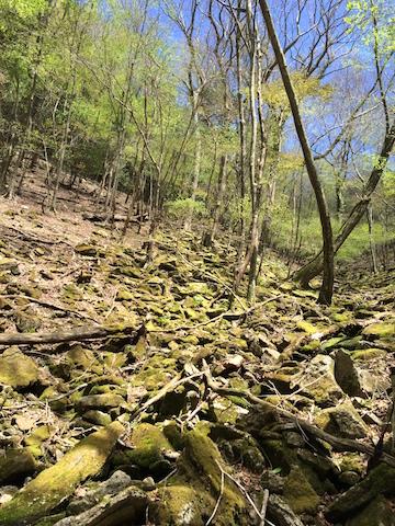 苔の綺麗な沢