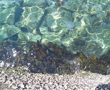 6月の海にクラゲ