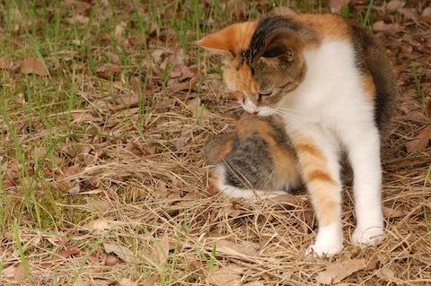 何かに興味津々の猫