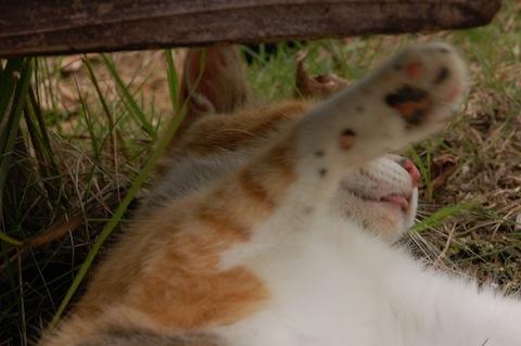 甘えん坊のネコ