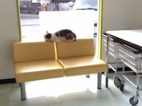 コインランドリーの猫