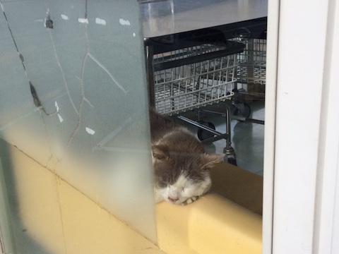 コインランドリー外からの猫